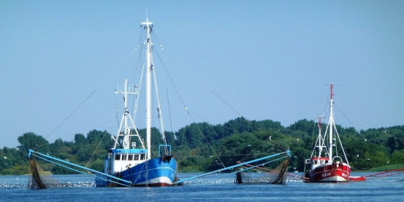 Fishing Industry Business